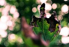 Fotografie - Nič nežije naveky - 757384
