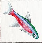 - Akváriové rybky - akryl na sololite (rôzne na výber) - 759311