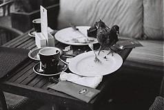 Fotografie - Ráno v Amsterdame - 781814