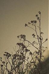 Fotografie - Art of Nature - 831466