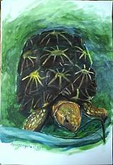 Obrazy - Zvieratá - akryl na výkrese A3 (rôzne na výber) - 849043