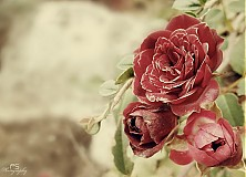 Fotografie - Brown vintage - 864481