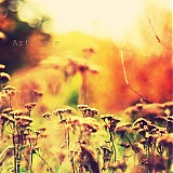 Fotografie - Oranžová lúka - 895472