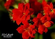 Fotografie - Červený kvet - 909512