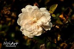 Fotografie - Kolekcia JESEŇ 11 posledná jesenná kráska - 912483