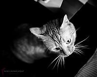 Fotografie - Mačací pohľad - 964390