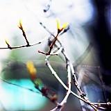 Fotografie - Súhra - 967614