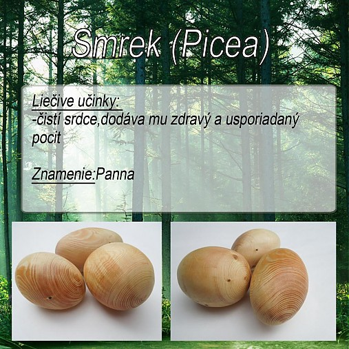 Smrek (Picea)