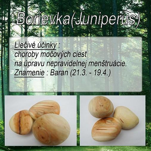 Borievka (Juniperus)