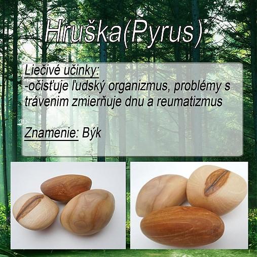 Hruška (Pyrus)