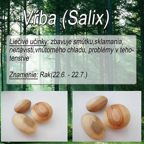 Vrba (Salix)