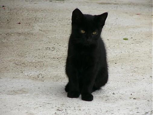 pekná čierna mačička čierny sex kreslené obrázky