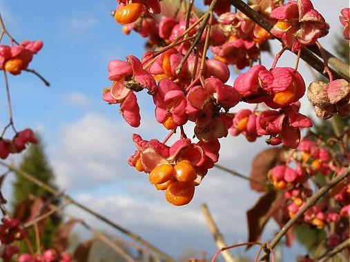 Jesenné plody