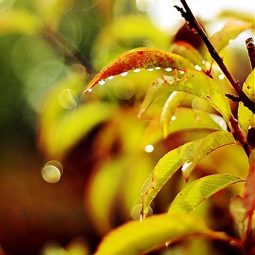 Vôňa dažďa