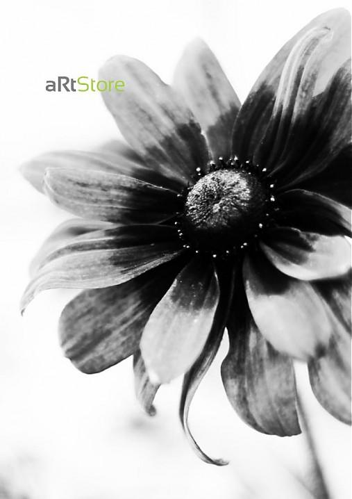 Čiernobiela krásavica