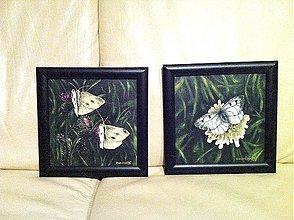 Obrazy - motýle, jarné slniečka - 1178371