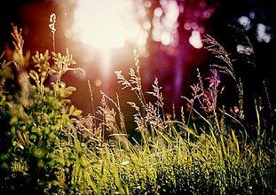 Fotografie - Snívame - 1188353