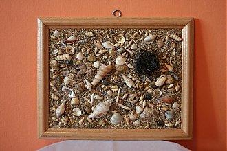 Obrázky - morský ježko - 1318539