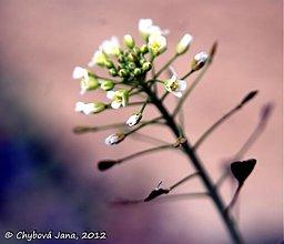 Fotografie - Neha - 1364108