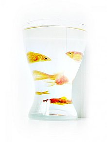 Dekorácie - Váza - Akvárium - 1508872