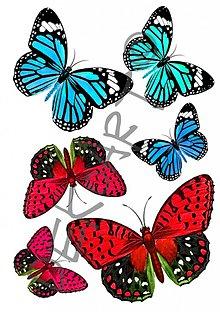 Papier - Nažehľovačky- Motýle1 - 1540519