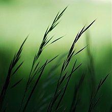 Fotografie - v zelenom - 1569066