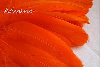 Suroviny - Kačacie oranžové R11 - 1692286