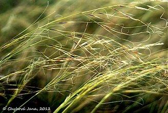 Fotografie - Vo vetre - 1724035