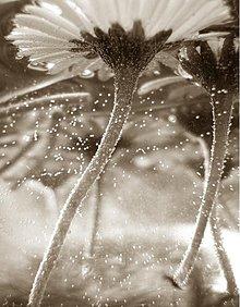 Fotografie - Vodné krásky / foto + rámik - 175142