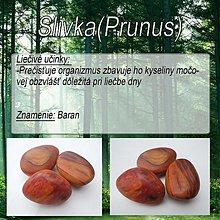 Iné doplnky - Slivka (Prunus) - 1894414