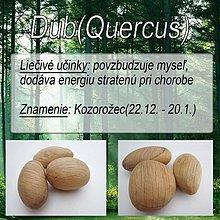 Iné doplnky - Dub (Quercus) - 1894497