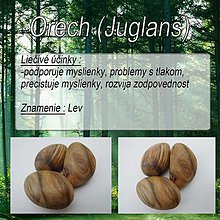 Drobnosti - Orech (Juglans) - 1894525