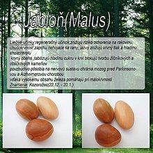 Dekorácie - Jabloň (Malus) - 1894530