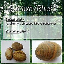Drobnosti - Sumach (Rhus) - 1894594