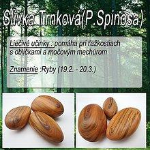 Drobnosti - Slivka Trnkova (Prunus) - 1894641