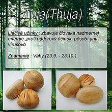 Doplnky - Tuja (Thuja) - 1894651