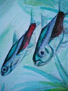 Kresby - Paracheirodon innesi - 1954280