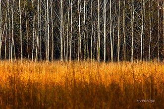 Fotografie - na kraji lesa... - 2066088