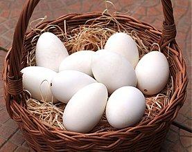 Suroviny - Husí vajíčka ke zdobení - 2120049