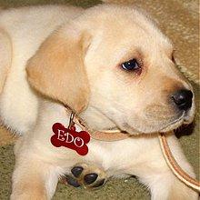 Pre zvieratká - MENOVKA pre psíka - 2152700