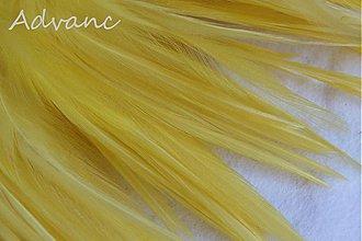 Suroviny - Kohútie jednofarebné žlté R7 - 2165043