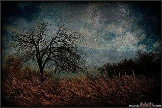 Obrazy - The Novembre Tree - 224091