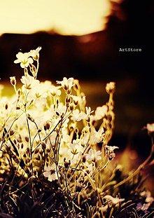 Fotografie - Zaliate lúčmi - 2242384