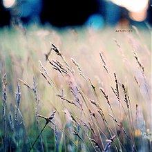 Fotografie - Závan leta - 2266604
