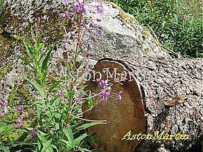 Fotografie - V lese v Tatrách ... - 2272438