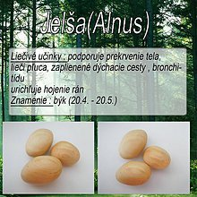 Nezaradené - Jelša(Alnus) - 2496423
