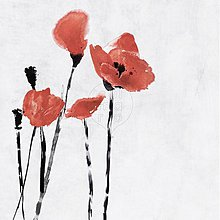 Obrazy - Obraz s makmi - Wild Poppies II. - 297691