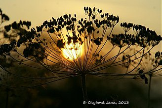 Fotografie - slnko ti dám - 2978756