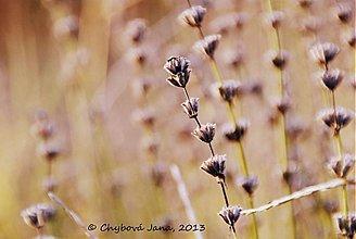 Fotografie - Levanduľové - 3057517