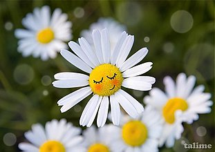 Grafika - Aj kvety snívajú... - 3076715